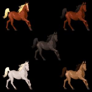 5 Horse Graphic